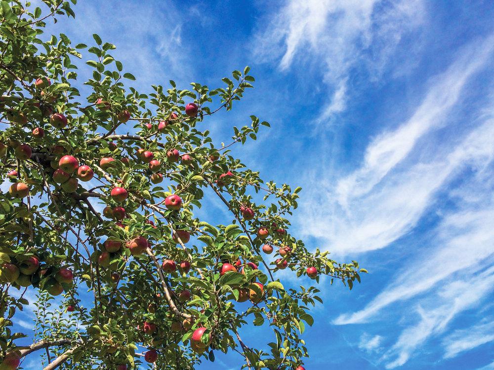 Candyapple Sky and Tree.jpg