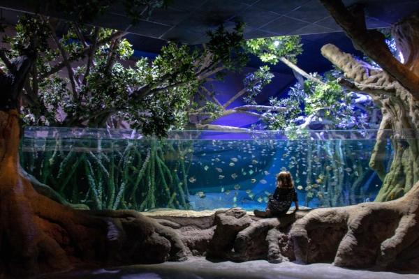 seville-aquarium-review.jpg