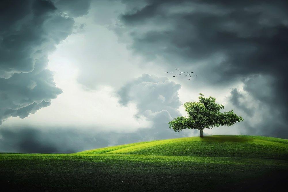 tree-832079.jpg