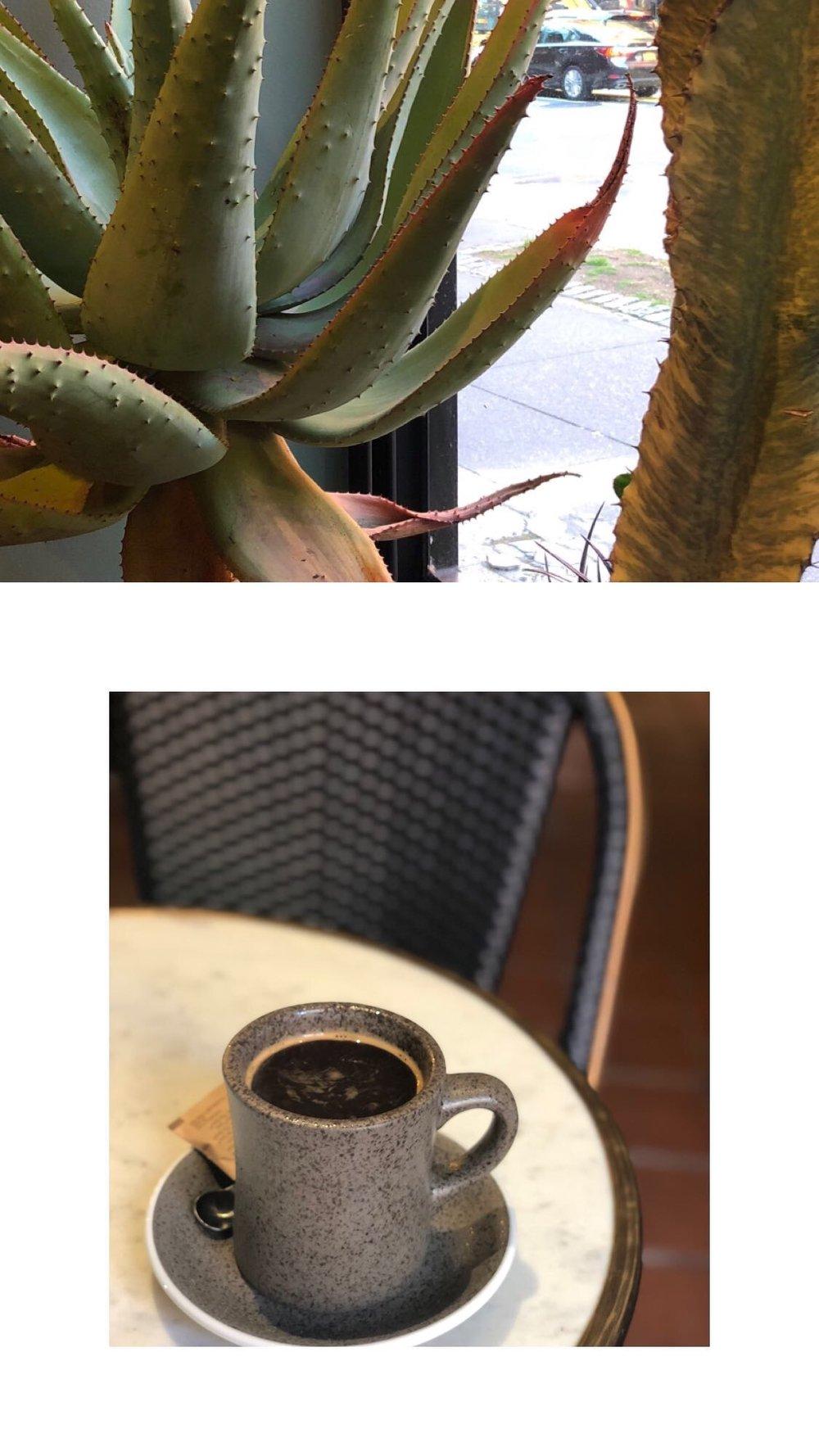 plantshed