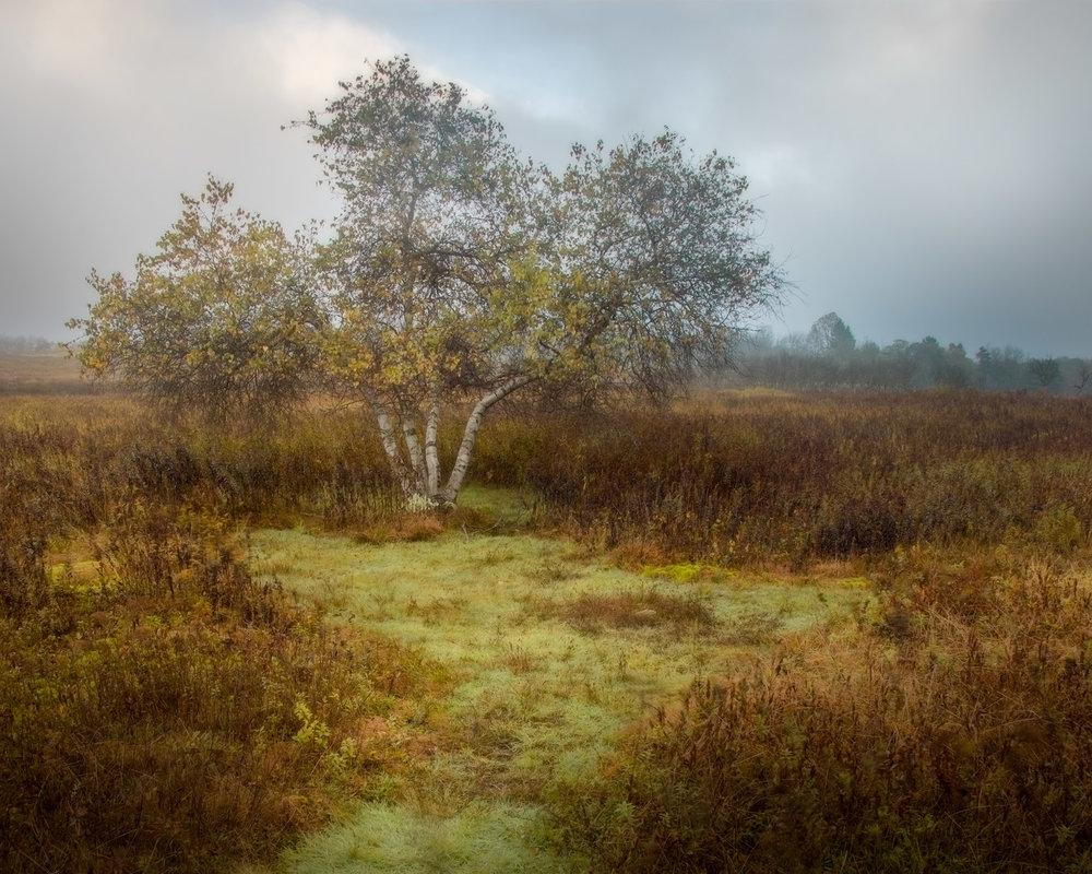 Big Meadow Tree on Foggy Morning Shenandoah National Park, VA 2018