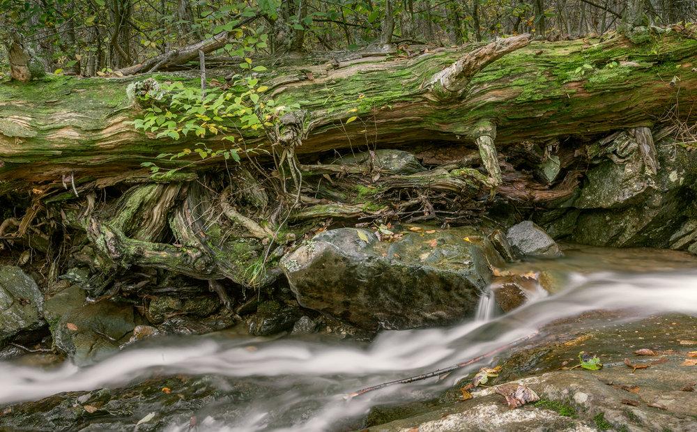 Fallen Tree and Stream Shenandoah National Park, 2018 2018