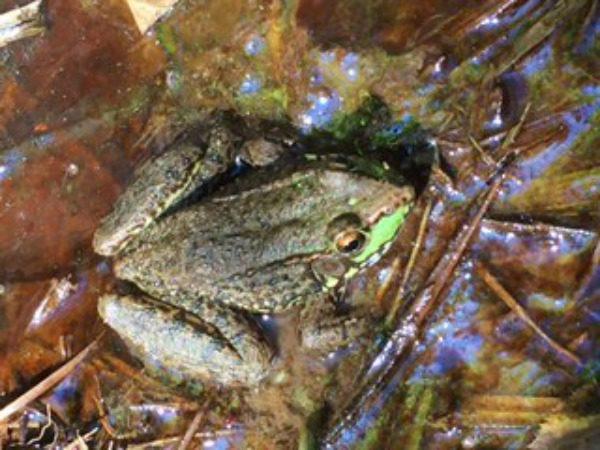 frog-600x450.jpg