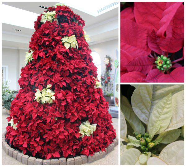 hershey-conservatory-christmas