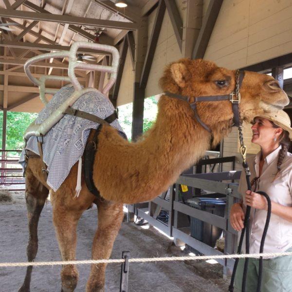 camel-rides-600x600.jpg