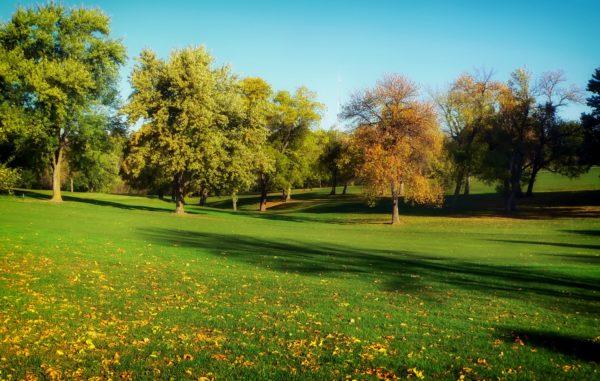 trees-grass-lawn-park-600x381.jpg