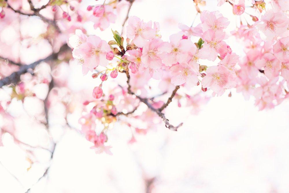 masaaki-komori-579102-unsplash.jpg