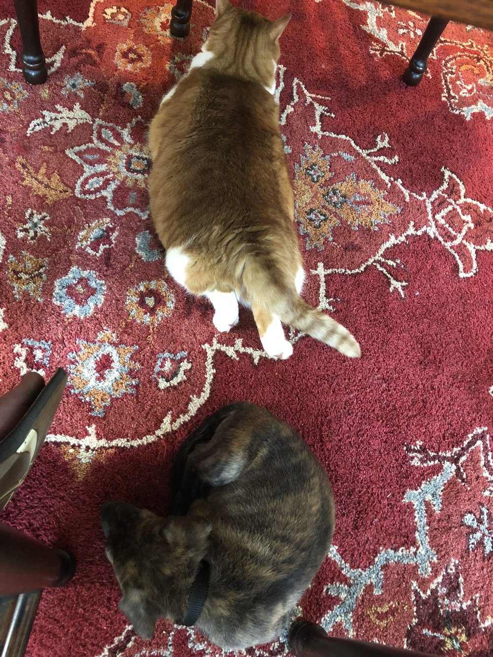 Bonnie thinks she and Cleo the cat are friends.