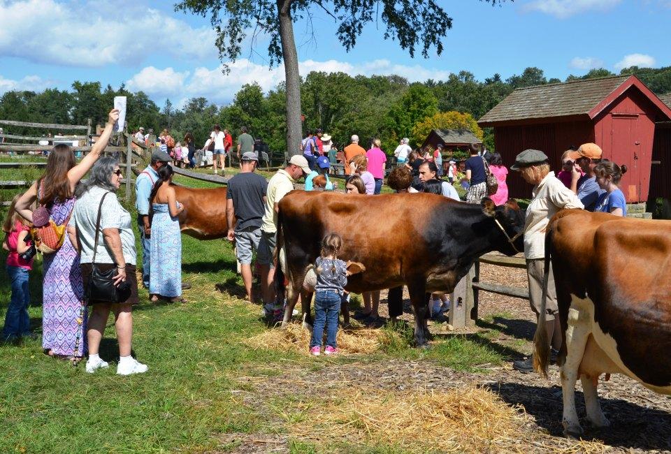 ff_sept_8_2013_meet_the_cows_0.jpg