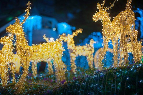 holiday_lights_spectacular_tbzoo-600x400.jpg