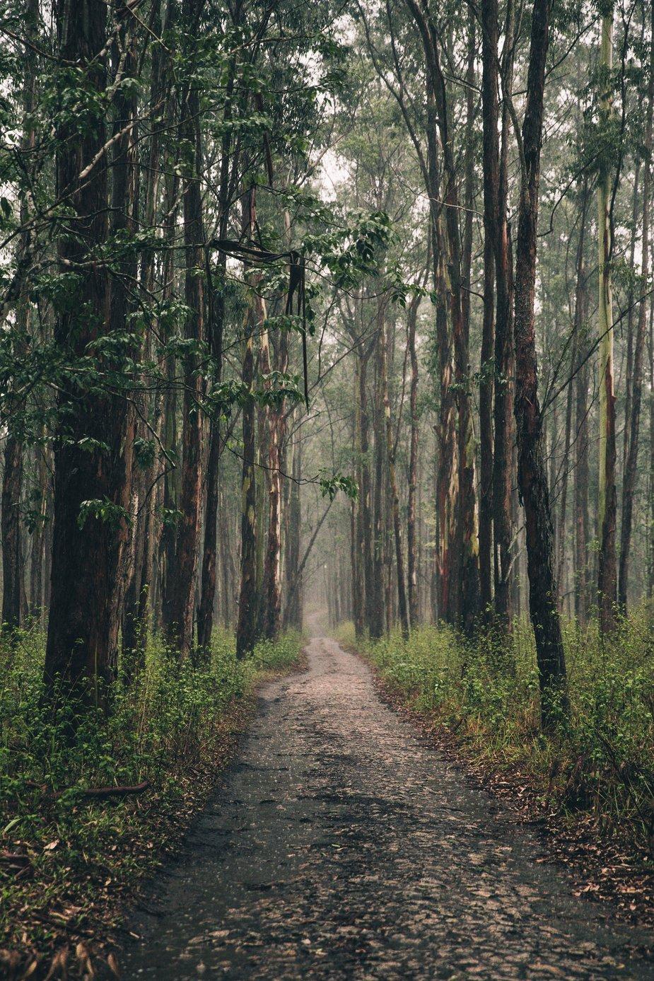 long-forest-path_925x.jpg