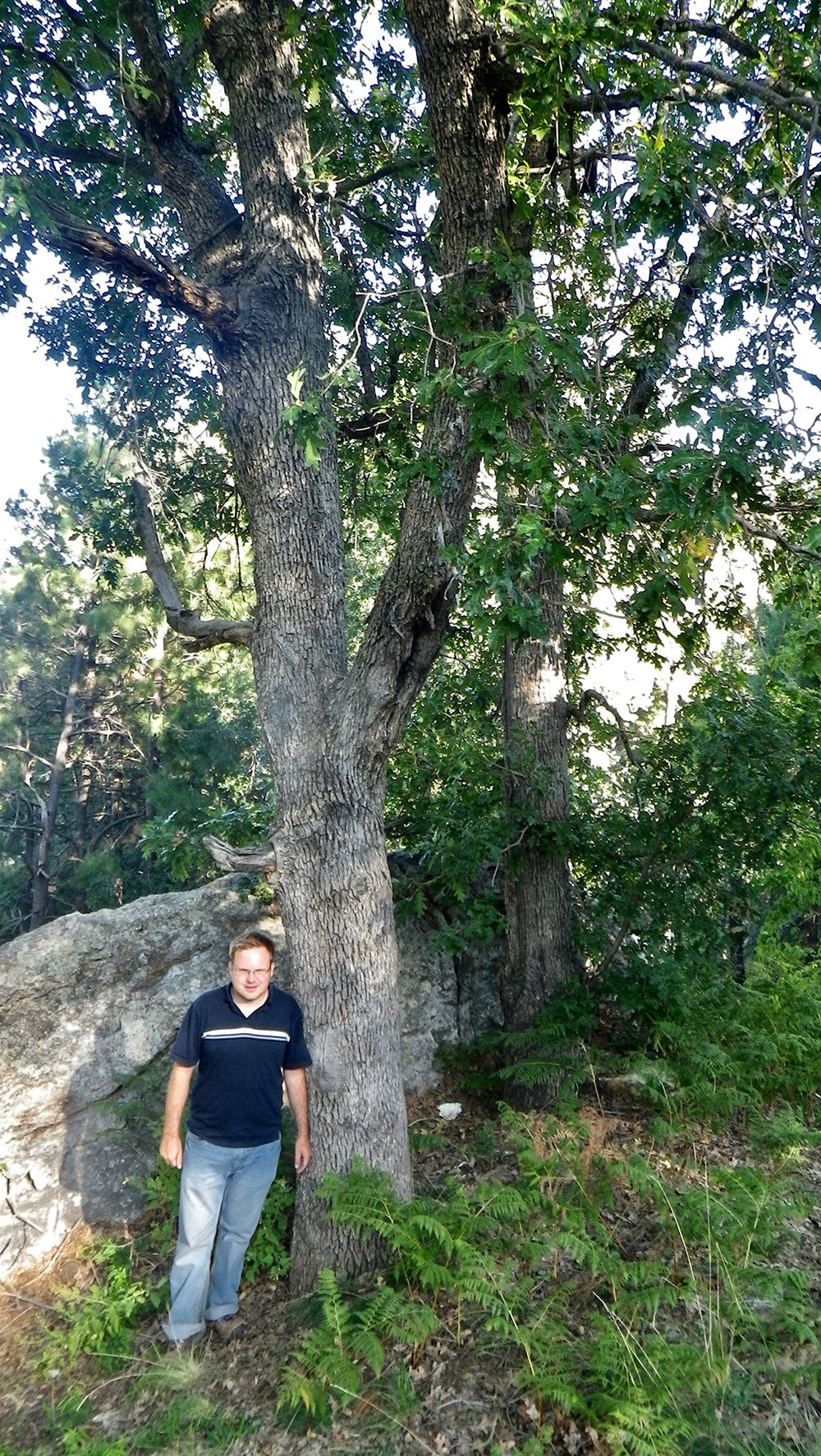Mount Lemmon White Oak
