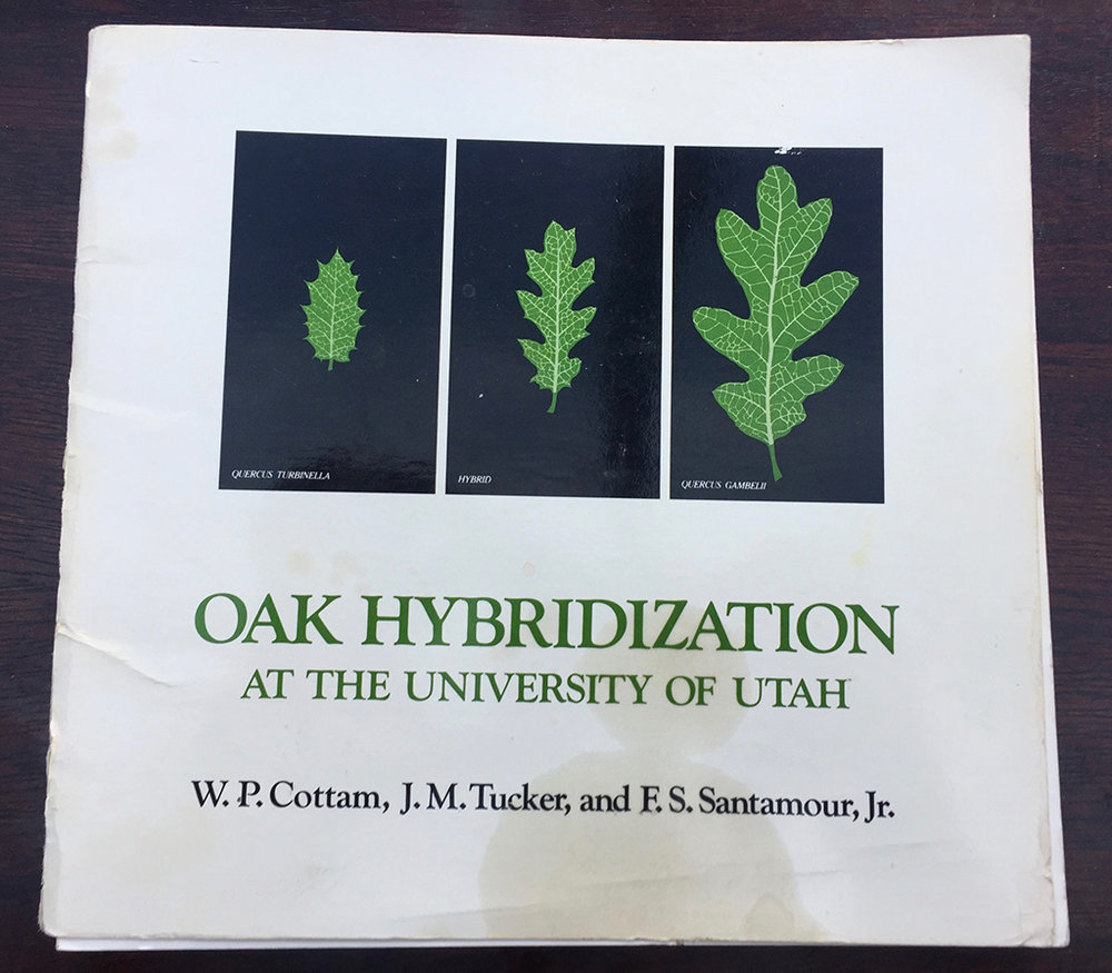 Oak Hybridization At The University of Utah