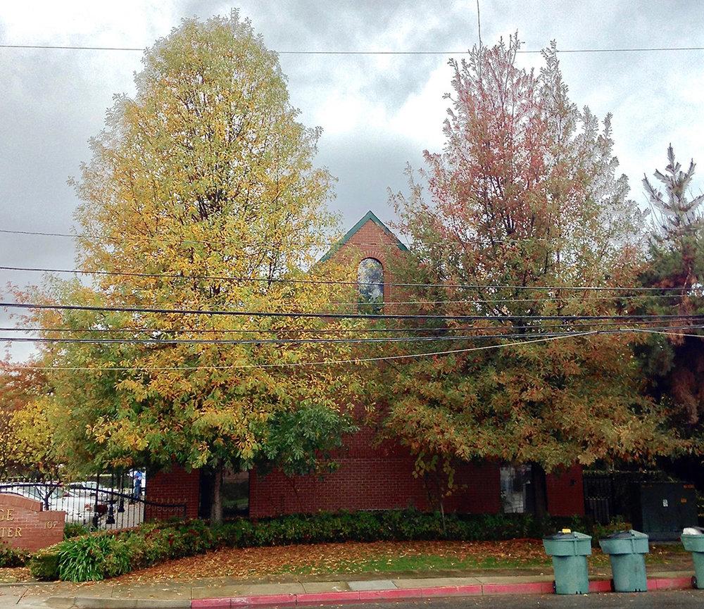 Compton's Oak