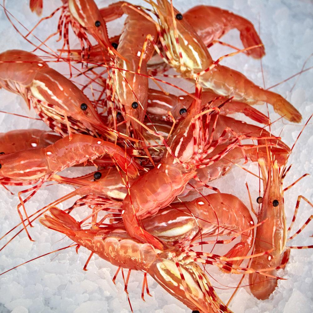 Shrimps.jpg