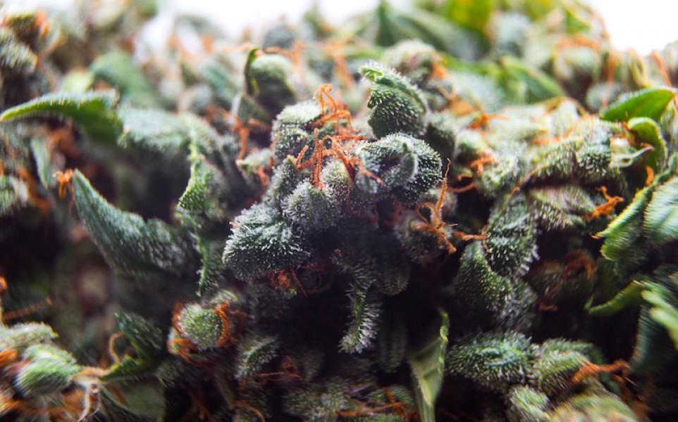 most-popular-sativa-strains-america.jpg