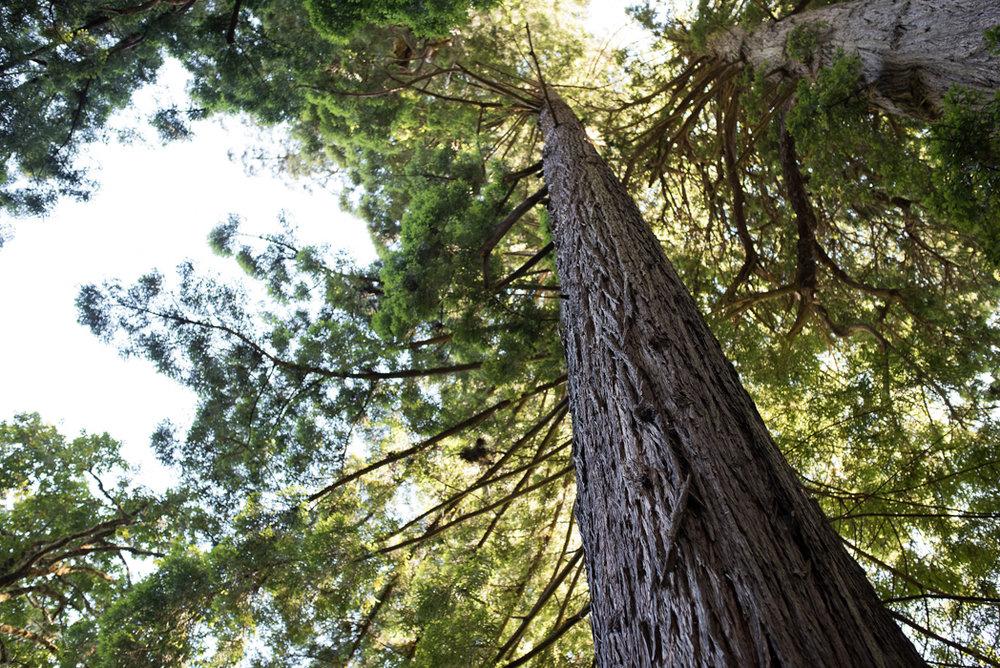 California Redwood Adventure (5 of 58).jpg