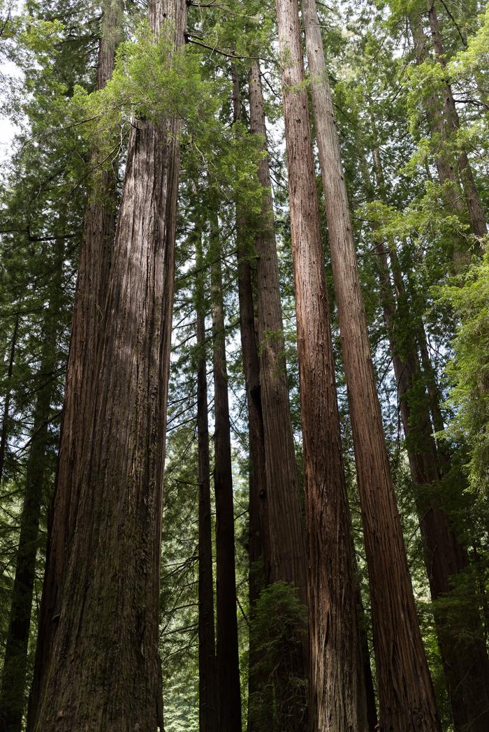 California Redwood Adventure (6 of 58).jpg