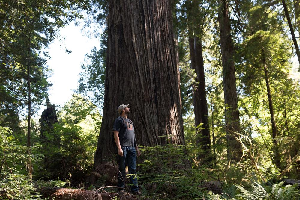 California Redwood Adventure (8 of 58).jpg