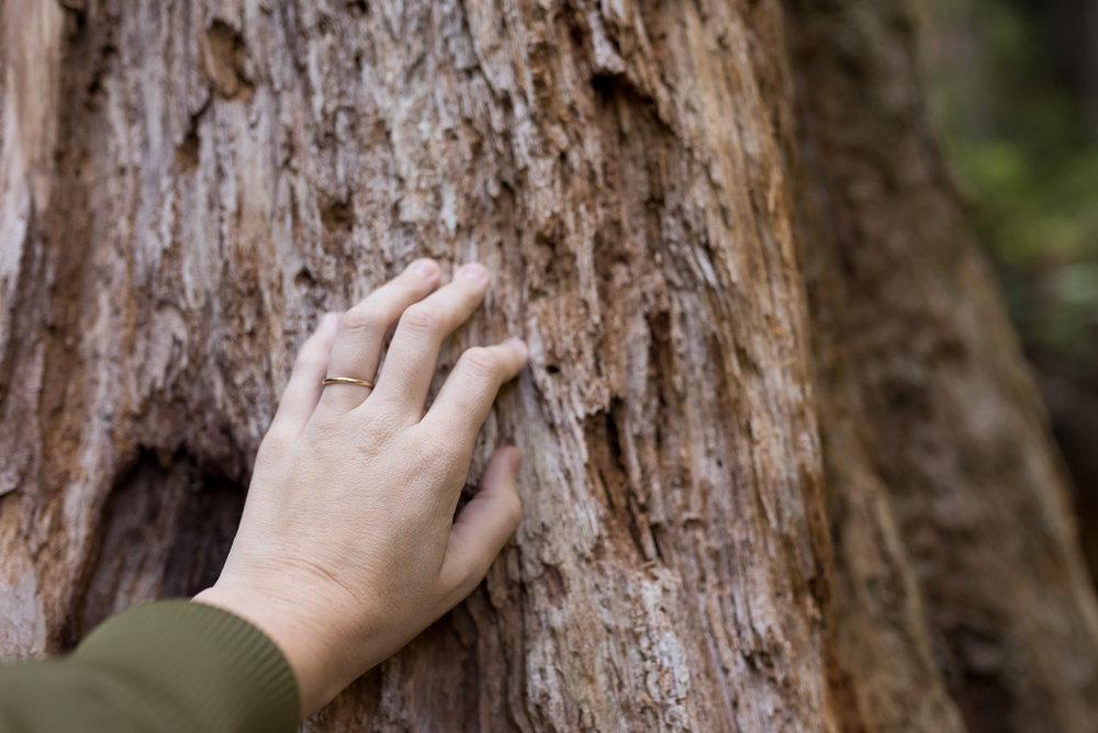 California Redwood Adventure (13 of 58).jpg
