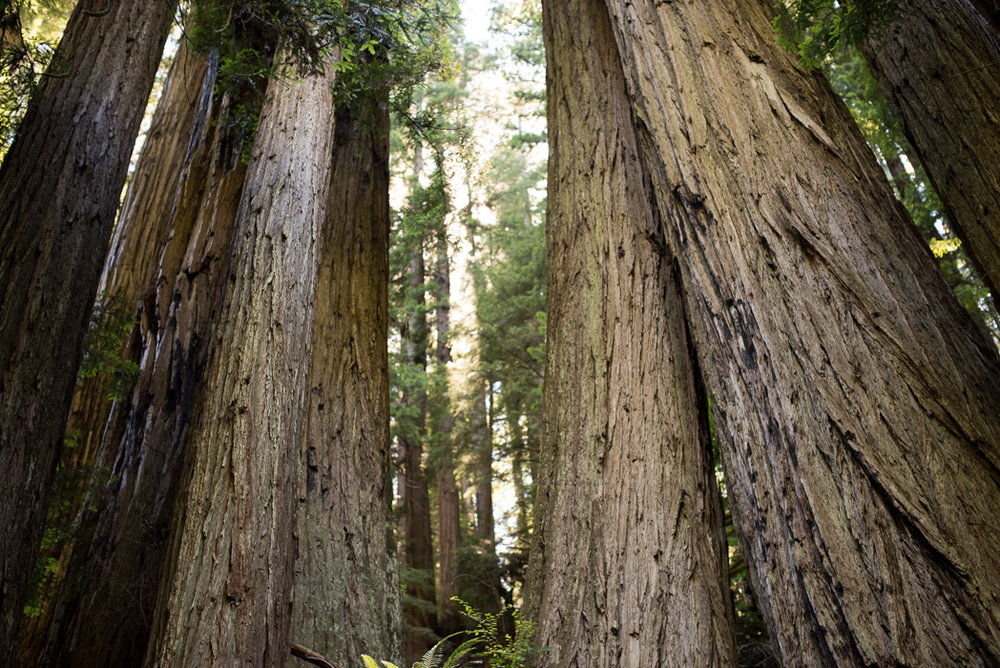 California Redwood Adventure (18 of 58).jpg