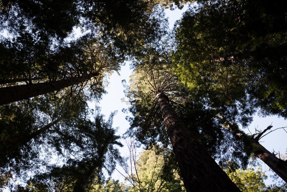 California Redwood Adventure (28 of 58).jpg