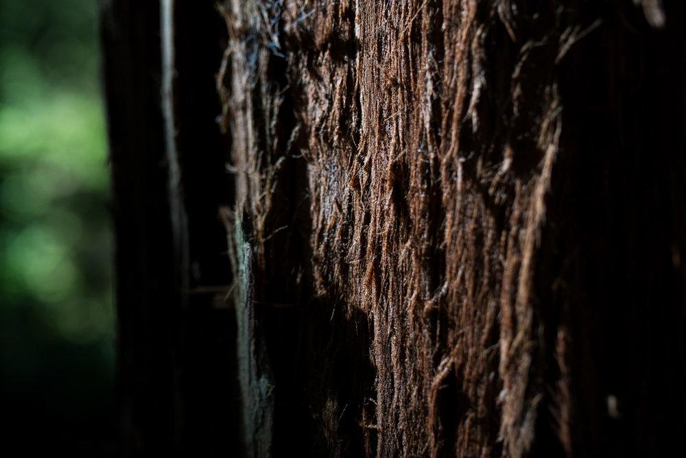 California Redwood Adventure (31 of 58).jpg