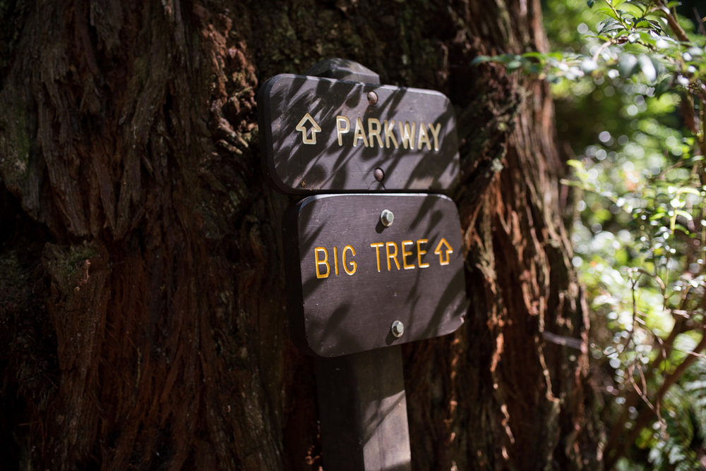 California Redwood Adventure (33 of 58).jpg