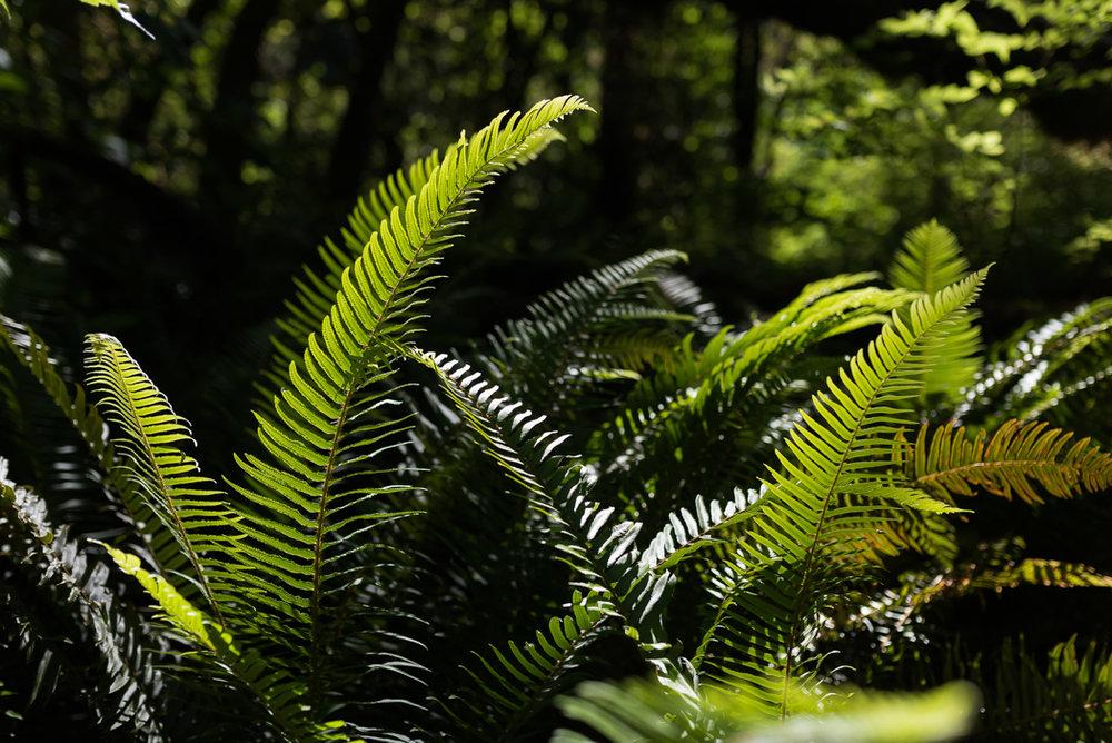 California Redwood Adventure (39 of 58).jpg