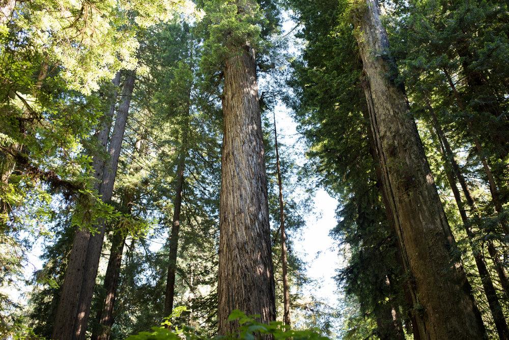 California Redwood Adventure (40 of 58).jpg