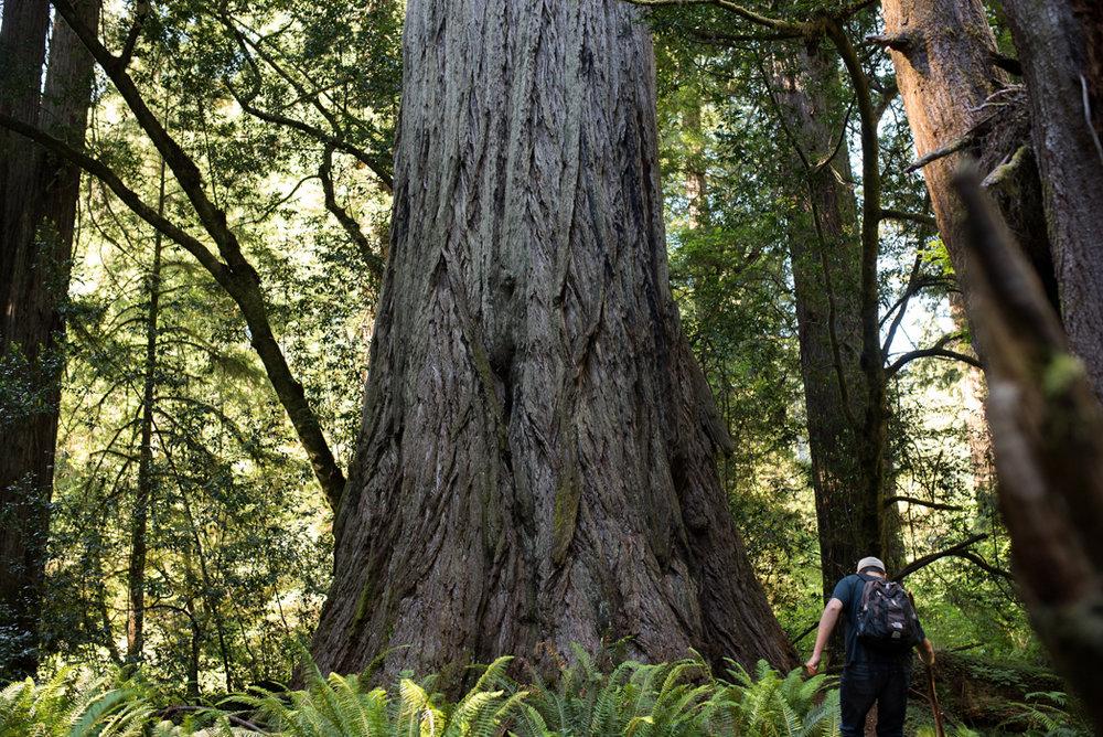 California Redwood Adventure (41 of 58).jpg