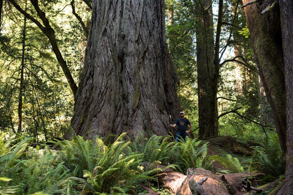 California Redwood Adventure (45 of 58).jpg