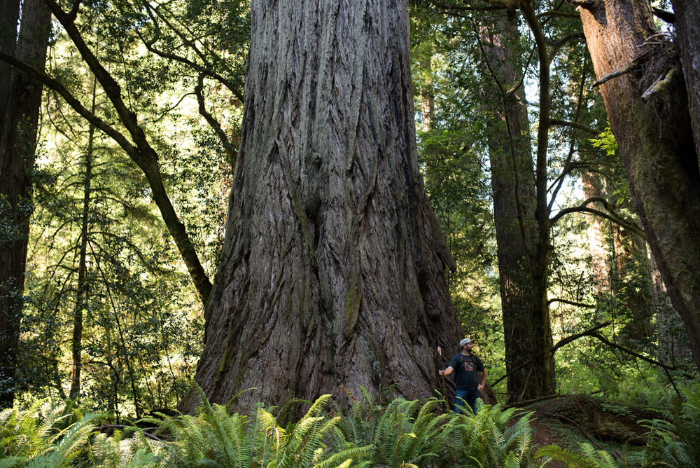 California Redwood Adventure (47 of 58).jpg
