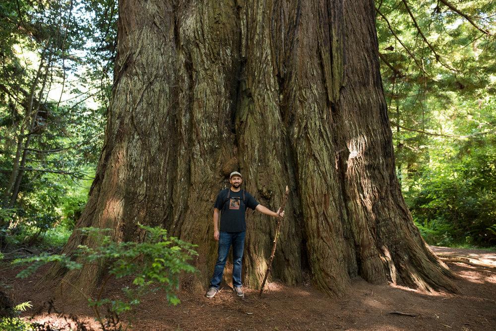 California Redwood Adventure (49 of 58).jpg