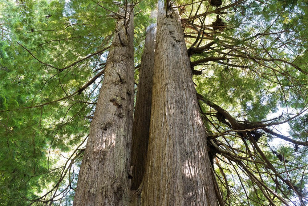 California Redwood Adventure (56 of 58).jpg
