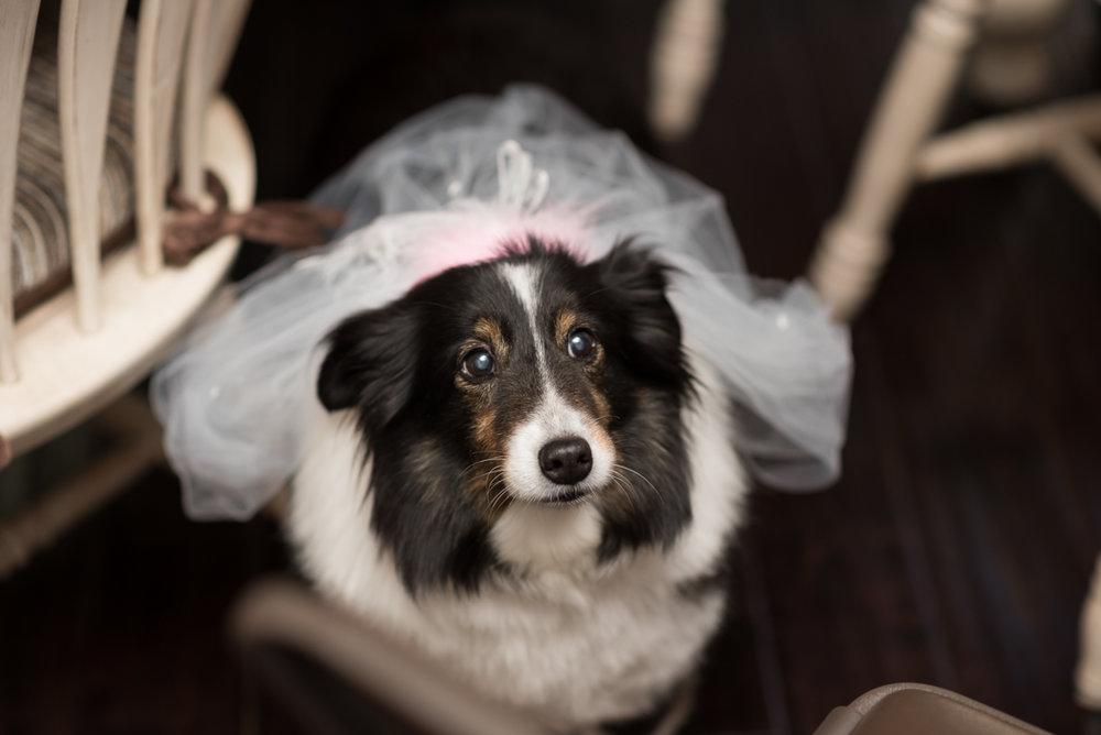Armour House Wedding Photographer, Armour House Wedding Photography, Lake Forest Wedding Photographer, Armour House Wedding (105 of 1182).jpg