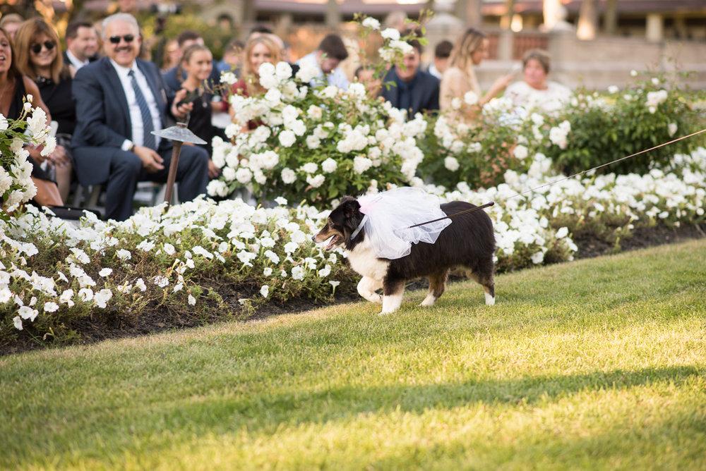 Armour House Wedding Photographer, Armour House Wedding Photography, Lake Forest Wedding Photographer, Armour House Wedding (360 of 1182).jpg