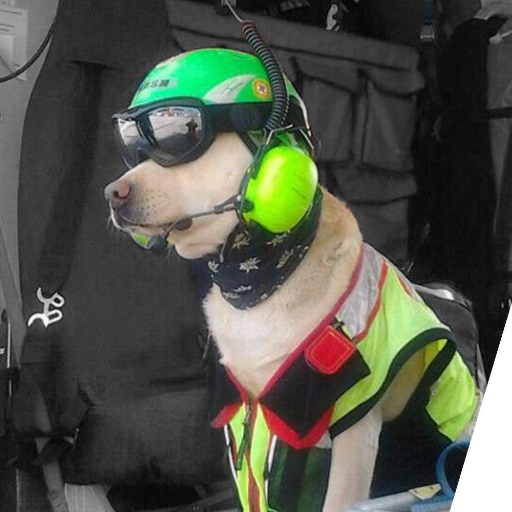 180524 - Helicopter Dog.jpg