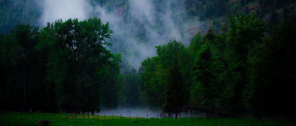green fog.jpg