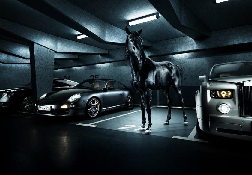 horse_011.jpg