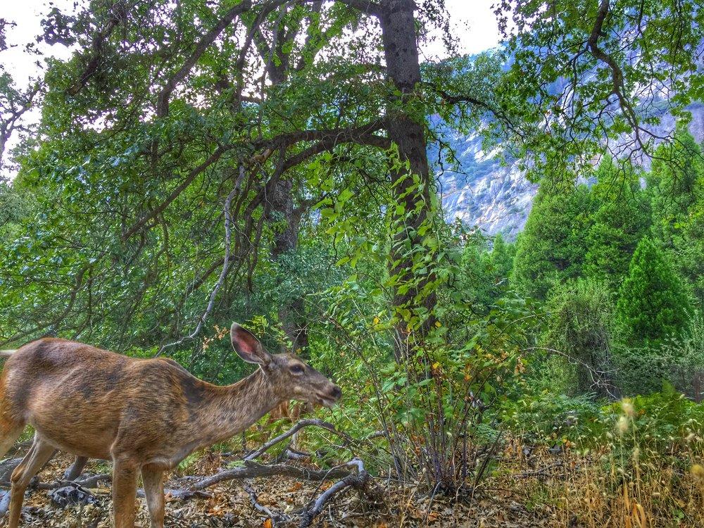 deer population explosion