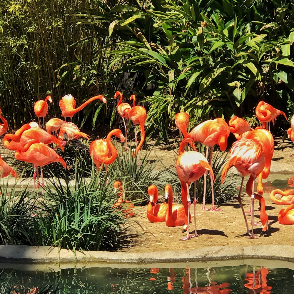 Flamingo Heaven
