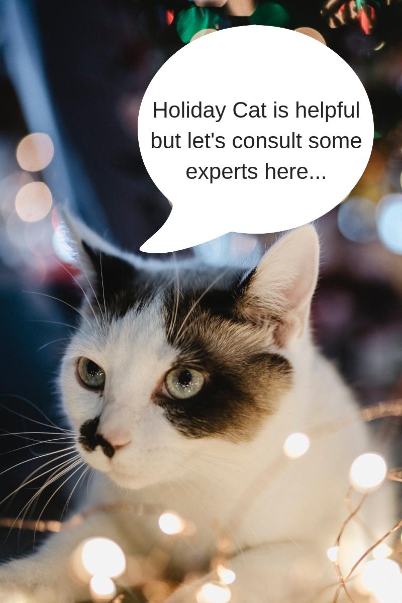 cat, christmas lights
