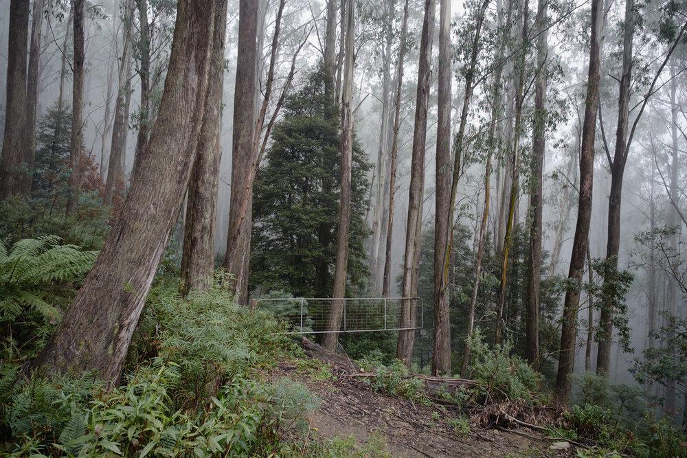 forest-gate_29503246726_o.jpg