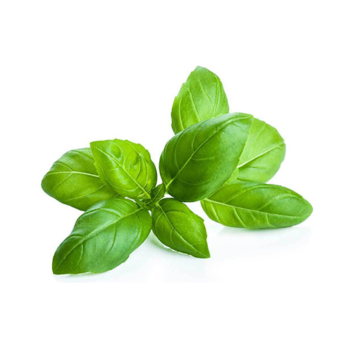 EXOTIC BASIL    Wellbeing : sooth & calm nervous system   Skin:  enhances the luster of dull-looking skin and hair. treat skin infection    Massage:  coconut oil mix with basil for stress relieving