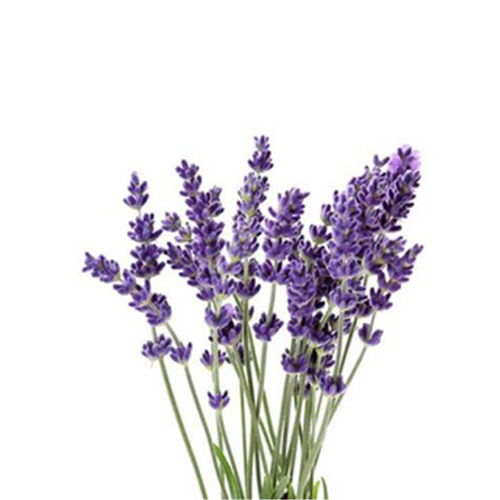 LAVENDER    Wellbeing : antioxidant, improve mood and brain function. sleep & insomnia. benefits skin    Skin : antioxidant. balancing PH levels and soothing your skin    Massage : coconut oil mix with lavender for a body & mind relax massage