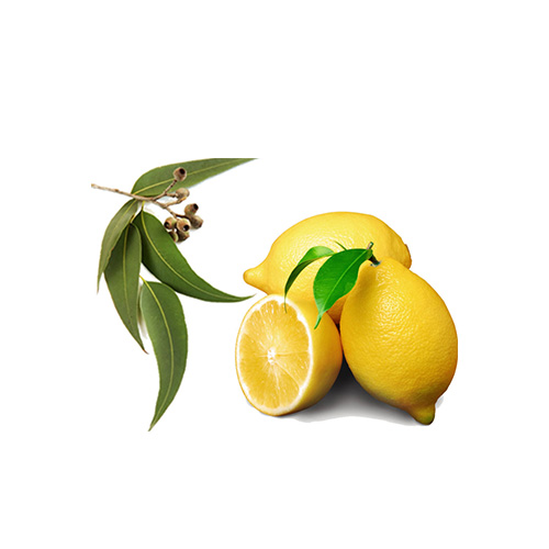 LEMON EUCALYPTUS    Wellbeing : strong anti-inflammatory. help the articulation, tendinitis, rheumatism. congestion relief    Skin : soothing the skin    Massage : coconut oil mix with eucalyptus lemon for mood & body balance/ wellness