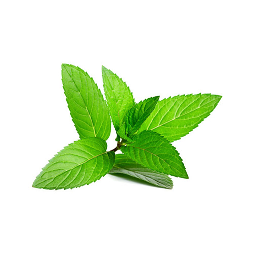 PEPPERMINT    Wellbeing : relief pain & nervousness. healthy digestion. breath freshener. emotionally balancing    Skin : brighten skin. nail care. acne. excellent toner    Massage : coconut oil mix with peppermint for a light & refreshing massage. energy boost