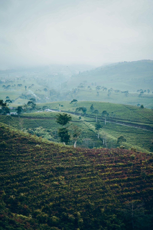 tru-birch-coffee-organic-pesticide-free-singapore-sustainable