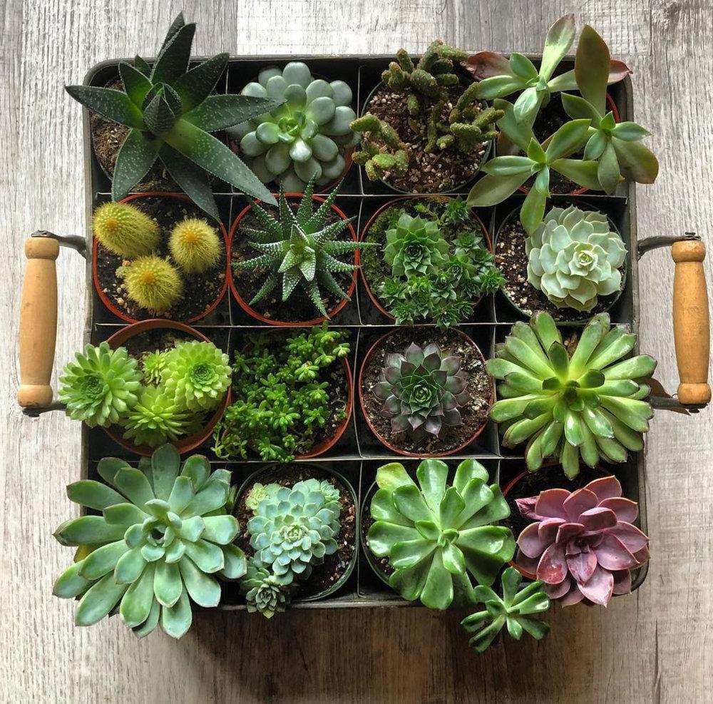 botanicalsevents&design -